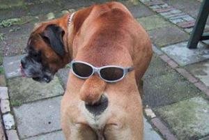 dvouhlavý pes