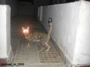 Svietiaca mačka