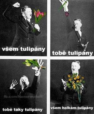 Všem tulipány