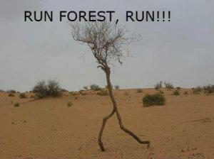 Běž foreste