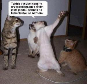 Kočičí problémy
