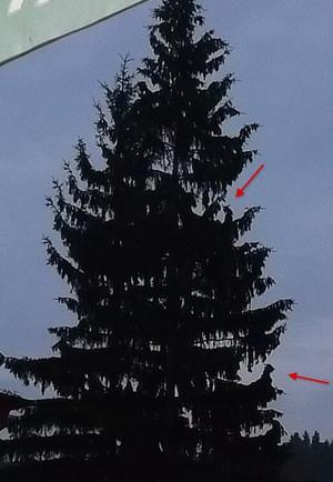 Kočka a kozel na stromě