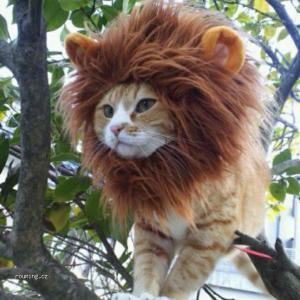Kočičí lev
