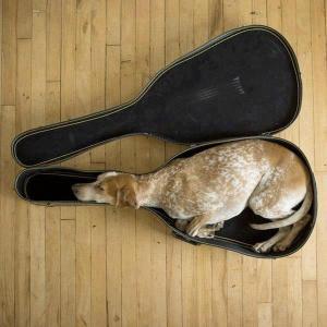Psi usnou všude