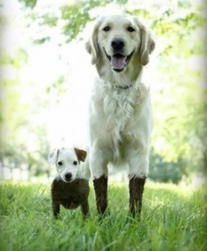 Výhoda velkého psa