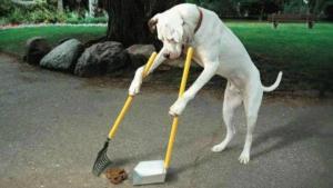 Šikovný pes