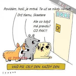 Vaši psi