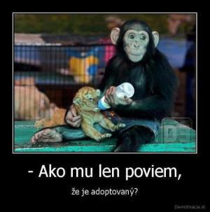 Adoptovaný