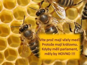 Včely a královna