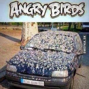 Angry Birds v životě