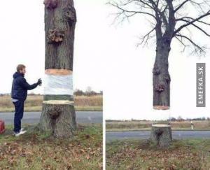 Levitující strom