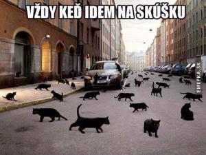 Černé kočky přes cestu:D