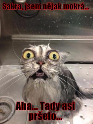 kočka ve vodě
