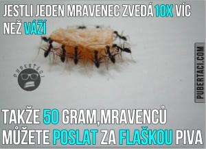 Mravenci jsou borci