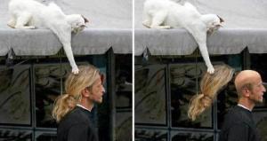 Kočka krade