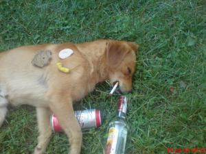 Pes jede