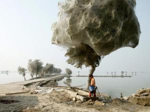 Stromy po záplavách