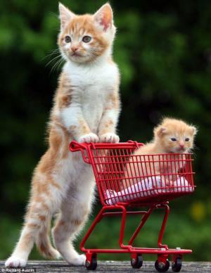 Jdeme nakupovat