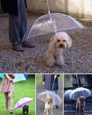 Psí deštník