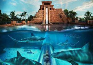 Žraločí tobogán