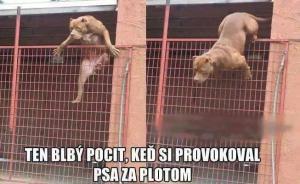 Když si provokoval psa za plotem