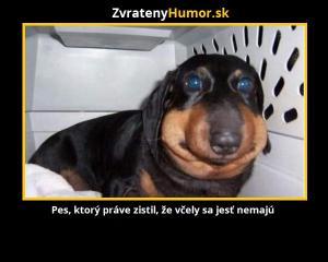 Pes, který snědl včely