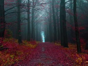 Německo - podzim