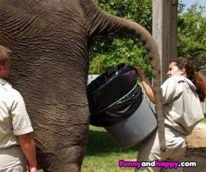 Slon kaká