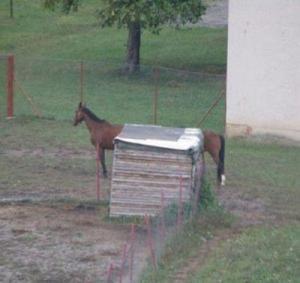 dlouhý kůň