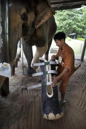 Pomoc slonovi