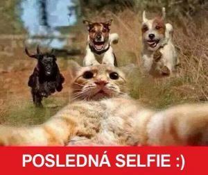 Kočičí selfie
