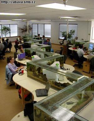 Firemní akvárium