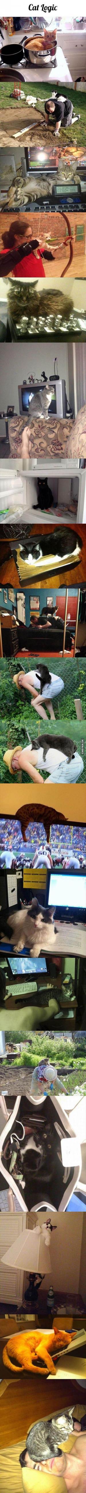 Logika koček