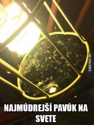 Nejmoudřejší pavouk na světě