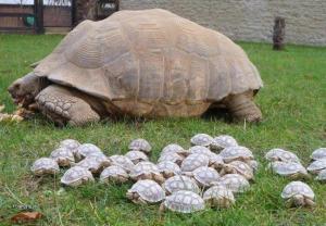 Želví rodinka