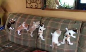 Pavoučí kočky