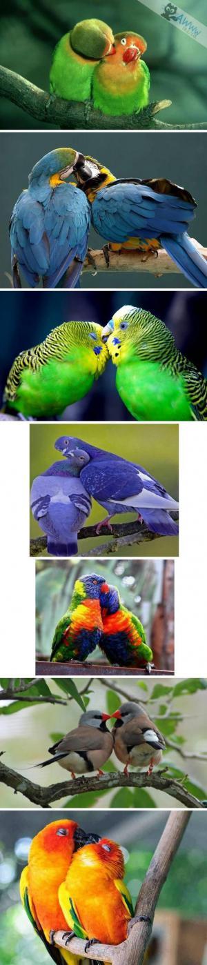 Papouščí láska
