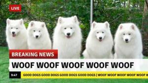 Zprávy
