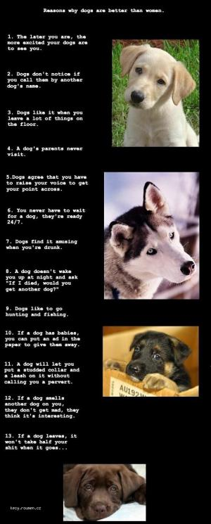 X Why Dogs are Better Then Women