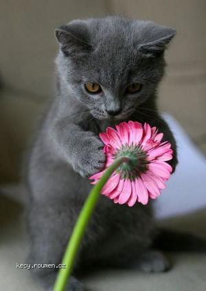 catieflower