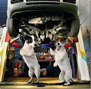 Dog service3
