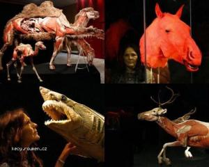 Exhibition of Interesting Animals in Cologne