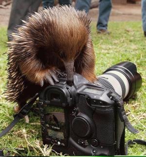 pichlavej fotograf