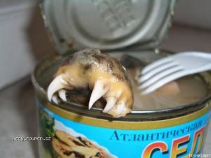 co vsechno se da najit v sardinkach