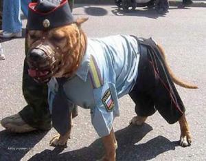 jak ma vypadat policejni pes