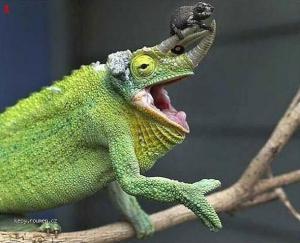 Chameleon Taxi