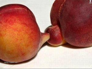 fruit anal