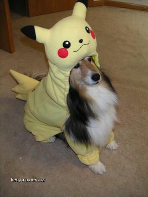 pikachu dog