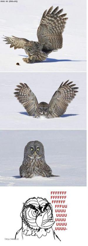 fffffffffuuuuuuuuuuuuuu owl