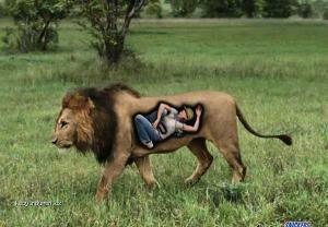snickers lion